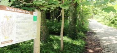Wald-Erlebnis-Weg Burgau Beschreibungsschild